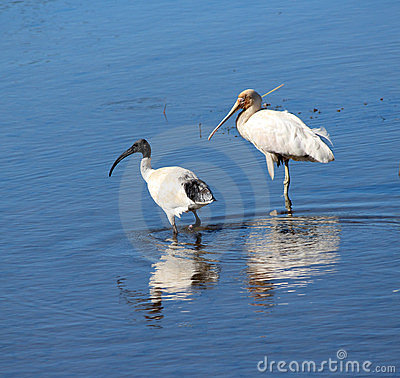 Waterbirds In The Lakes. Stock Photography - Image: 23864102