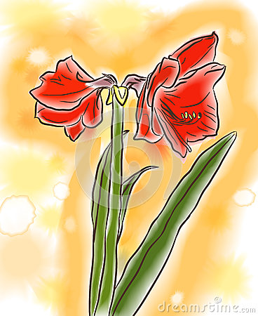 Watercolor amaryllis
