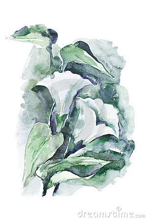 Watercolor -Bindweed-