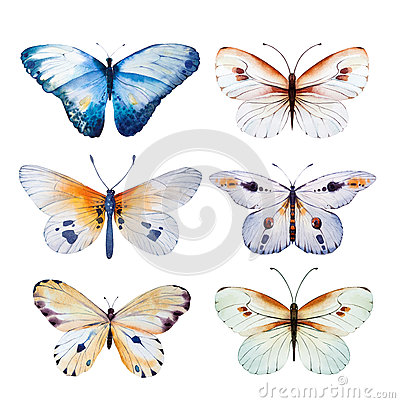 Free Watercolor Butterfly. Vintage Summer Isolated Art  Illustration For Your Design Wedding Card, Insect, Flower Beauty Stock Photo - 68673890
