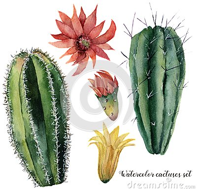 Free Watercolor Cactus And Flowers Set. Hand Painted Cereus With Red And Yellow Flower Isolated On White Background Royalty Free Stock Images - 113001539