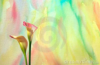 Watercolor With Calla Lilies