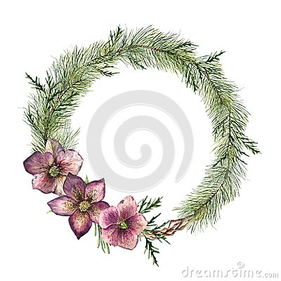 Free Watercolor Christmas Floral Wreath With Hellebore Flowers. Hand Painted Christmas Tree Branch, Cedar And Hellebore With Royalty Free Stock Photos - 100754948