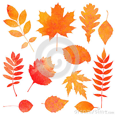 Free Watercolor Collection Of Beautiful Orange Autumn Leaves Stock Images - 45523834