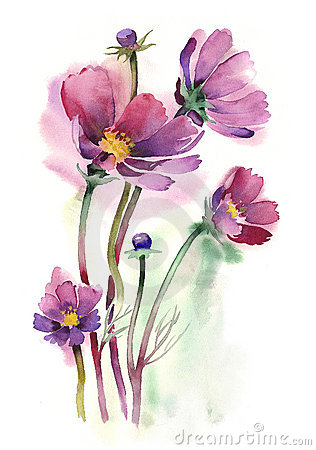 Watercolor -Cosmos flowers-