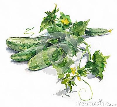 Watercolor cucumbers