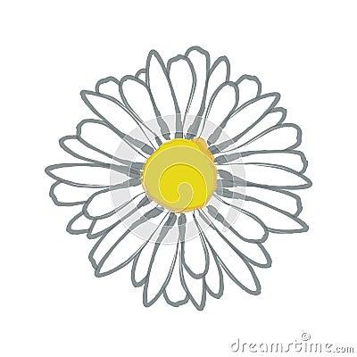 Watercolor daisy