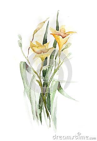 Watercolor -Daylily-