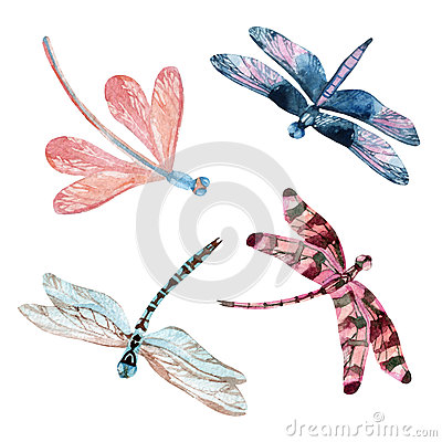 Free Watercolor Dragonfly Set Stock Image - 66293241