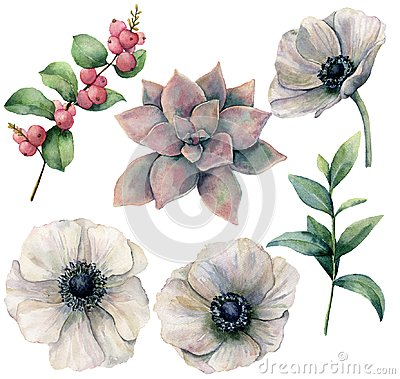 Free Watercolor Floral Set With White Anemone And Plants. Hand Painted Pink Succulent, Eucalyptus Leaves And Coral Hypericum Stock Photo - 115085330