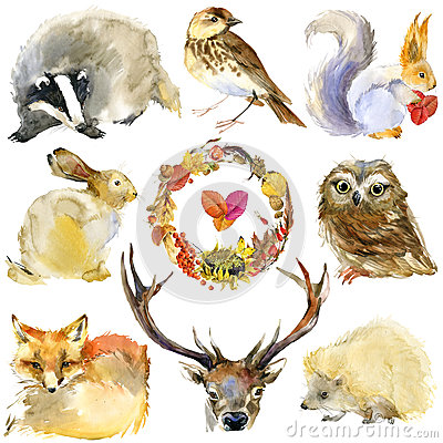 Free Watercolor Forest Animals Set Royalty Free Stock Photography - 62410487