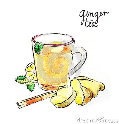 Watercolor ginger tea Vector Illustration