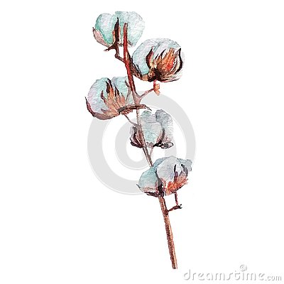 Watercolor hand drawn cotton branch. Cartoon Illustration