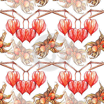 Watercolor hand drawn physalis winter cherry cape gooseberry fruit berry seamless pattern Stock Photo