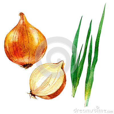 Watercolor illustration, image of a bow and onion bow Cartoon Illustration