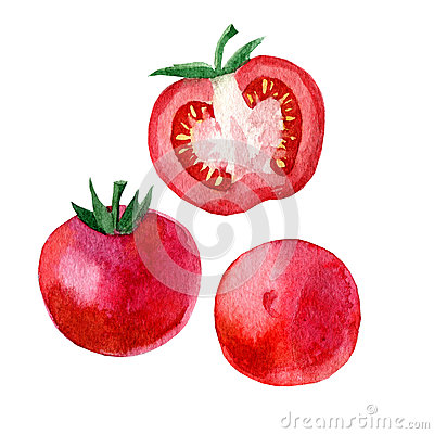 Watercolor illustration, image of a tomato and a slice of a tomato Cartoon Illustration