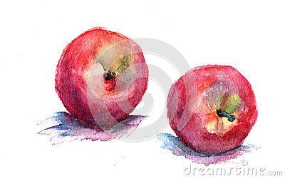 Watercolor illustration of nectarine