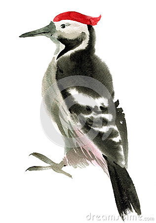 Free Watercolor Illustration Of  Woodpecker Royalty Free Stock Photos - 50670018