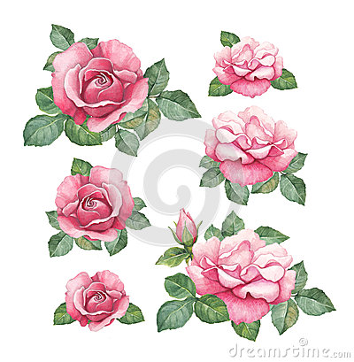 Free Watercolor Illustrations Of Roses Royalty Free Stock Images - 38379129