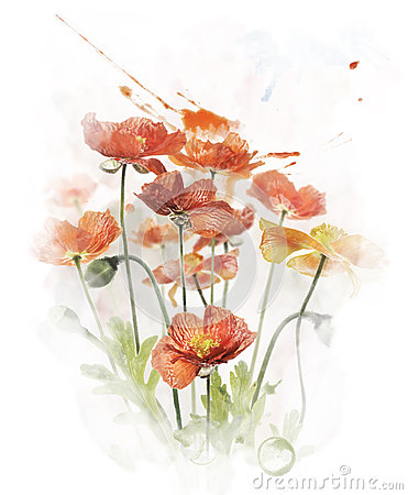 Free Watercolor Image Of  Red Poppy Flowers Stock Images - 42107684
