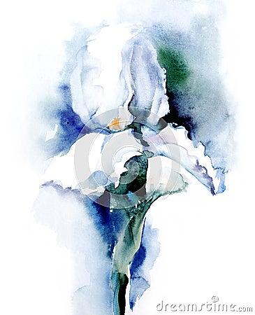 Free Watercolor-Iris- Stock Images - 19807304