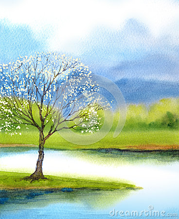 Free Watercolor Landscape. Flowering Tree By Lake Stock Image - 89800011