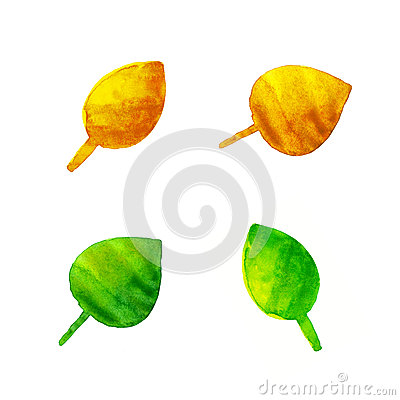Watercolor leaves isolated on white