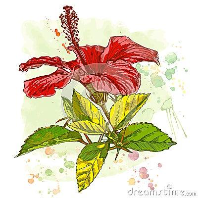 Watercolor paint - Hibiscus flower