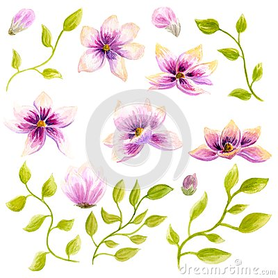 Free Watercolor Painting Magnolia Blossom Flower Wallpaper Decoration Art. Hand Drawn Isolated Closeup Tree Floral Illustration. Decora Stock Photos - 106625433