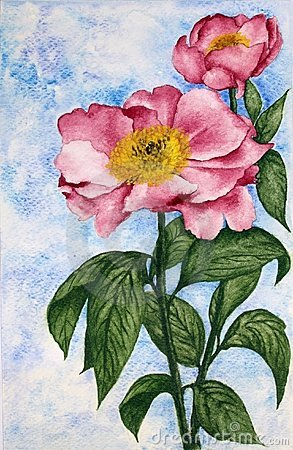 Watercolor Painting of two Camellia Flowers