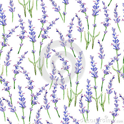 Free Watercolor Pattern With Lavender. Stock Photo - 57527430