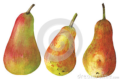 Watercolor pear on white