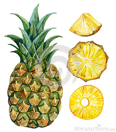 Free Watercolor Pineapple Set Stock Photos - 68252813