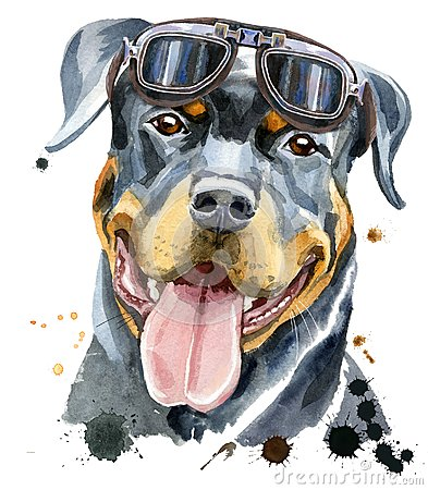 Free Watercolor Portrait Of Rottweiler Royalty Free Stock Photos - 117386478