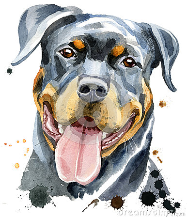 Free Watercolor Portrait Of Rottweiler Royalty Free Stock Photos - 97369568