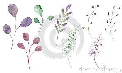 Watercolor set with leaves and branches on a white background. Stock Photo