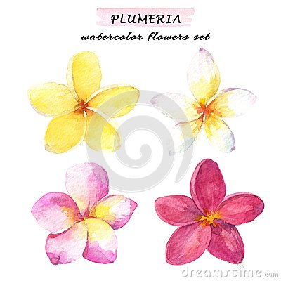 Free Watercolor Set Of Plumeria Tropical Flowers - White, Yellow, Pink And Red. Hand Drawn Illustration Isolated On White Background. Royalty Free Stock Photography - 118857717