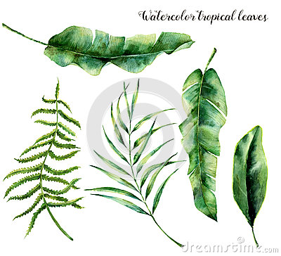 Watercolor set with tropical leaves. Hand painted palm branch, fern and leaf of magnolia. Tropic plant isolated on white Cartoon Illustration