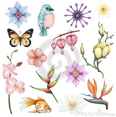 Free Watercolor Set With Exotic Flowers And Animal Element Stock Photos - 125318393