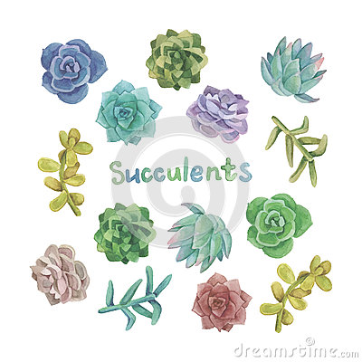 Free Watercolor Succulent Set Stock Photo - 55602990