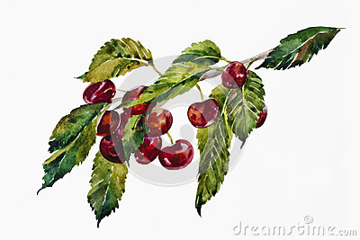Watercolor sweet cherries brunch