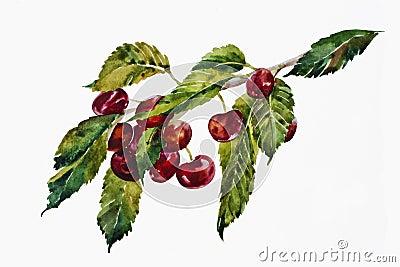 Watercolor sweet cherries brunch