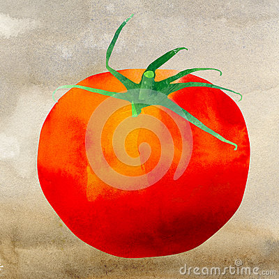 Watercolor tomato illustration with background
