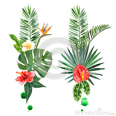 Free Watercolor Tropical Plants For Your Designs Royalty Free Stock Photo - 56372025