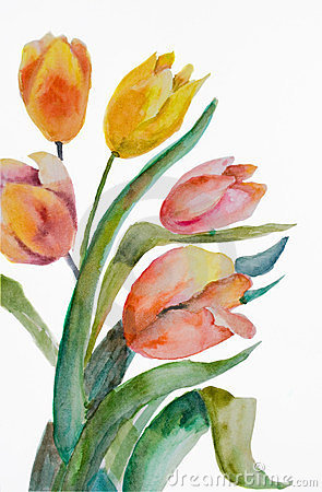 Watercolor Tulips flowers