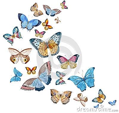 Free Watercolor Vector Butterflies Stock Image - 66142891