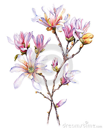 Free Watercolor With Magnolia Royalty Free Stock Photo - 37385605