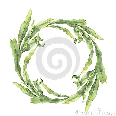 Free Watercolor Wreath With Laminaria. Hand Painted Underwater Floral Illustration With Algae Leaves Branch Isolated On White Stock Photography - 90900222