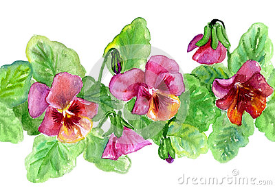Watercolors flowersViola