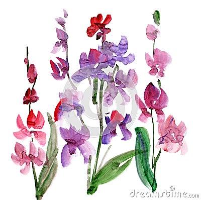 Watercolour de la flor de la orquídea